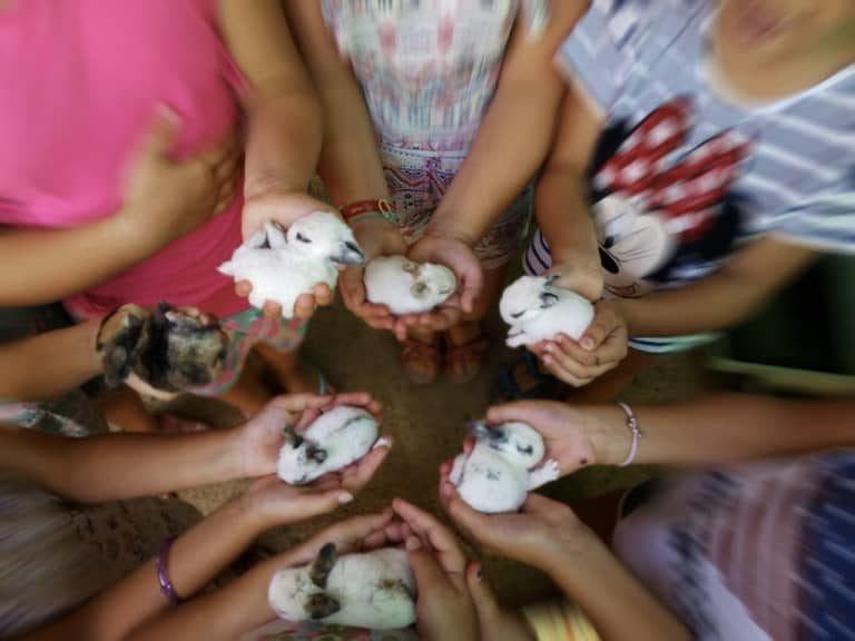 actividades para familias con los animalitos de la granja escuela La Buhardilla