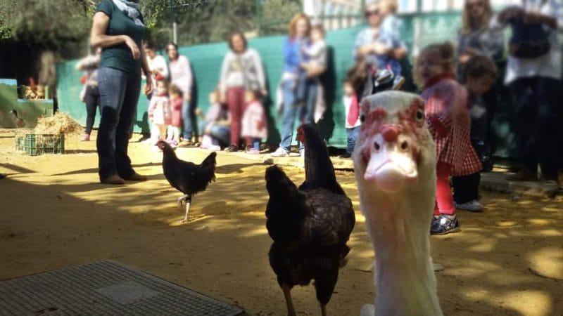 En La granja escuela La Buhardilla tienes al pato mas fotogénico