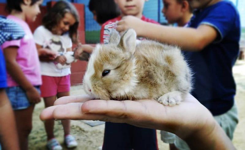 En la Granja escuela La Buhardilla hay conejitos entre otros muchos animales