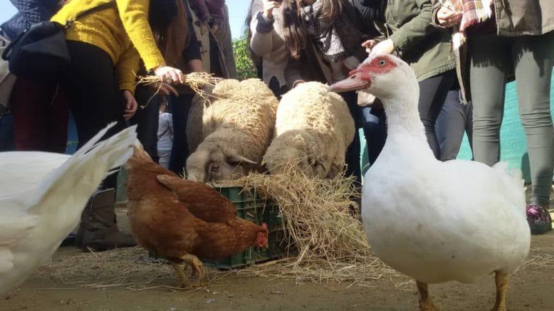 Animales de la Granja Escuela La Buhardilla