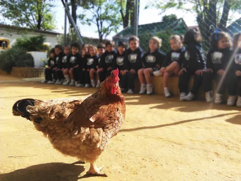 una de nuestras top model de la granja escuela La Buhardilla